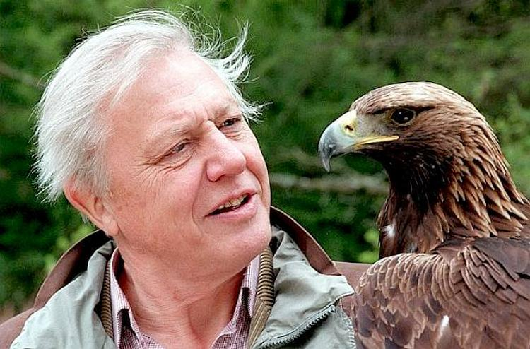 David Attenborough Bald Eagle USA Symbol